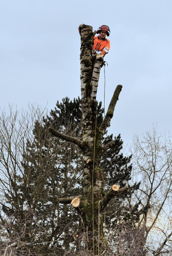 Baum_faellen