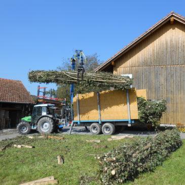 Erstellen von Totholz-Faschinen