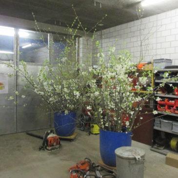 Zweige als Dekoration