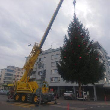 Stellen eines Weihnachtsbaumes im Zentrum von Steinhausen