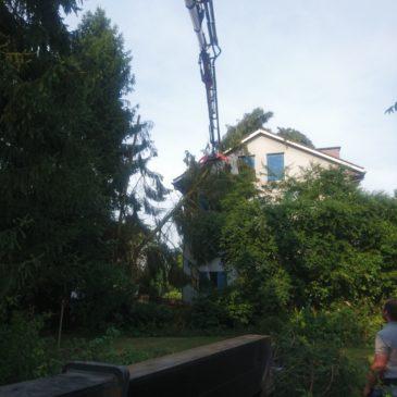 Entfernen eines umgestürzten Baumes