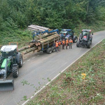 Freiholzen des Strassenprofiel entlang einer Gemeindestrasse