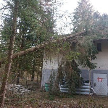 Baum nach einem Sturm ab einer Waldhütte räumen