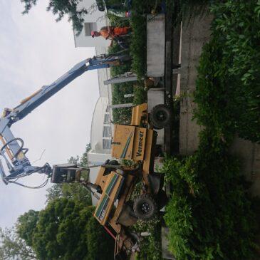 Fällen eines Baumes in einer Terrassensiedlung