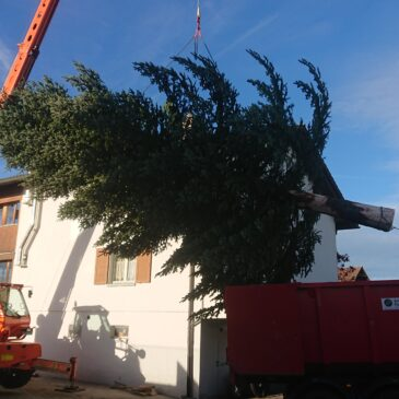 Bereitstellen eines 12 Meter grossen Weihnachtsbaumes
